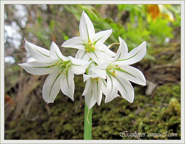 Fleurs des bois