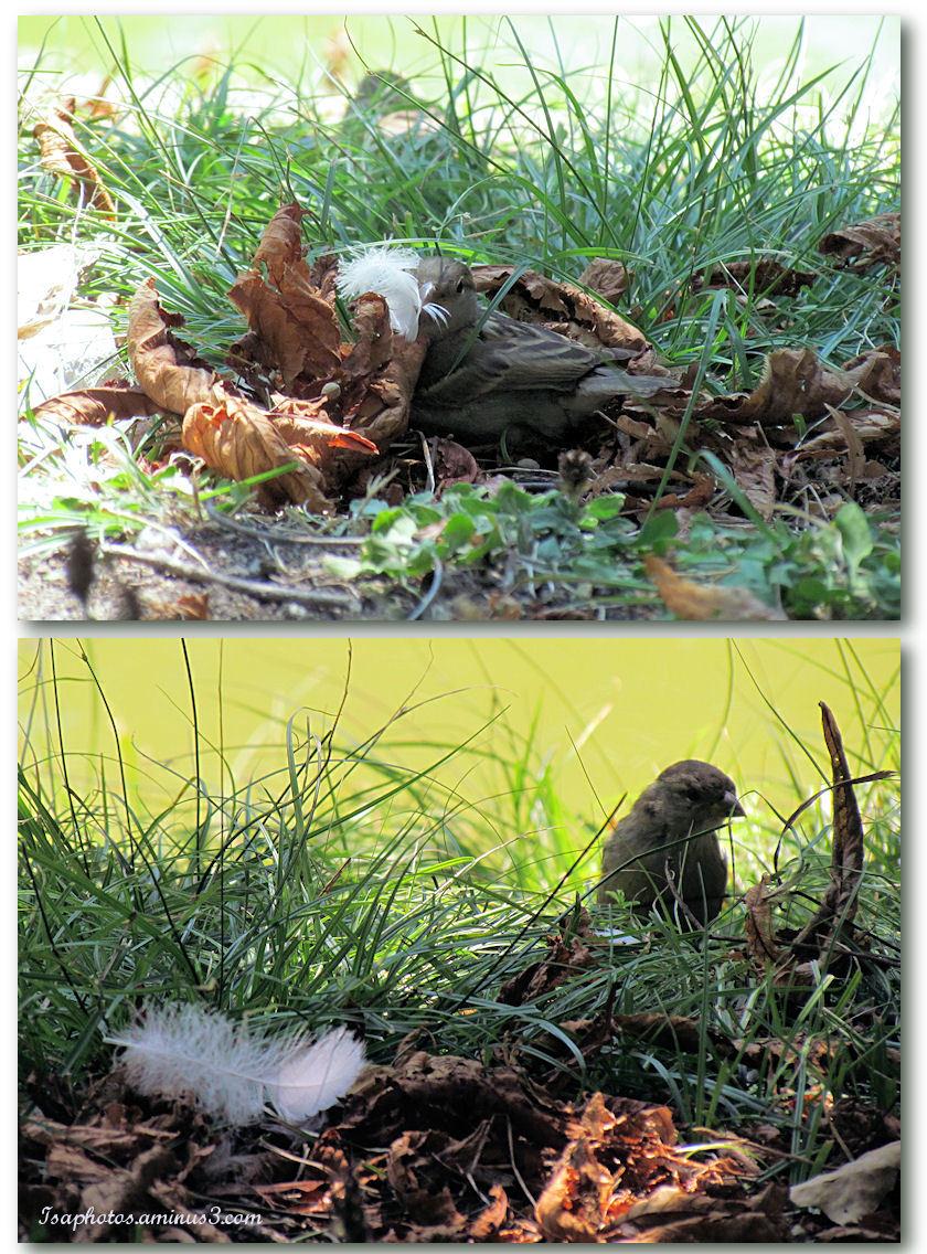 Et une jolie plume pour mon nid