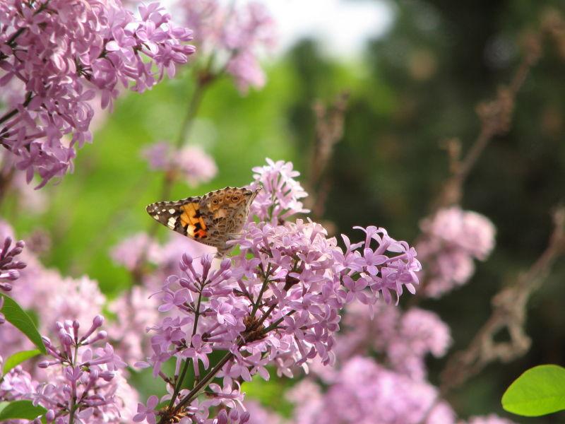 butterfly... :)