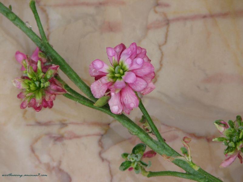 lovely flower...! :)