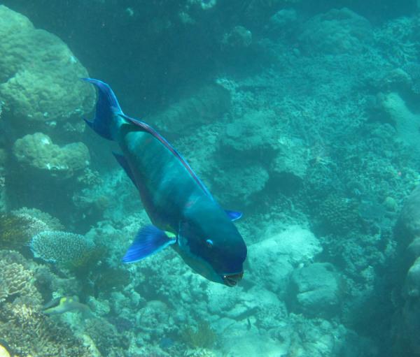 Great Barrier Reef - Under Water World 16/18