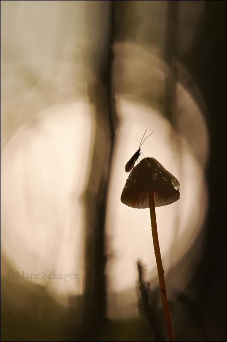 mushroom (4/8)