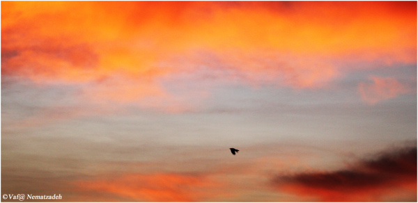 Sunrise & Blackbird