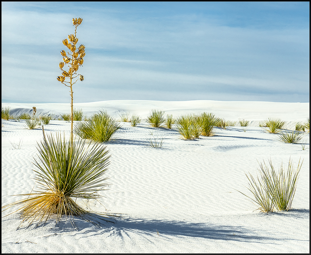 White Sands NM and plants