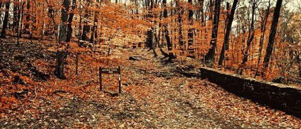 Tyler Trail