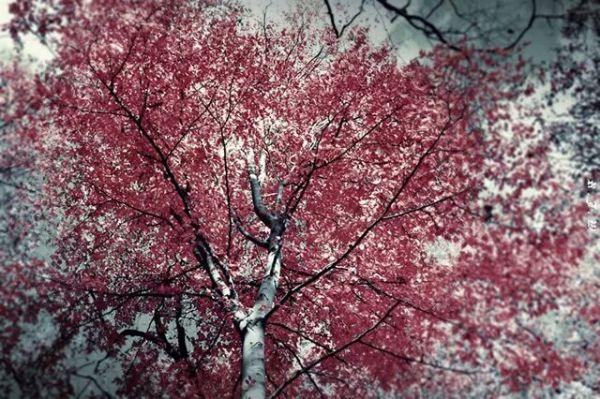 Tyler tree