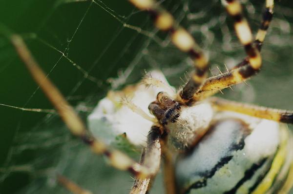 Arachnophobie...
