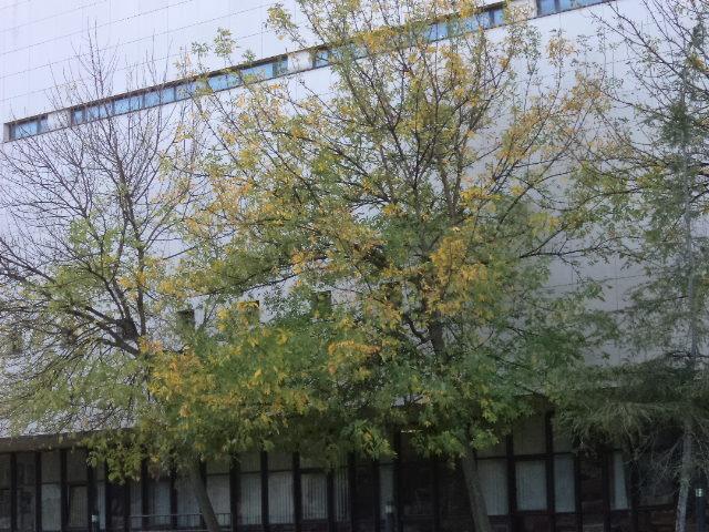 Autumn: lovely season