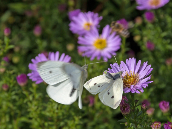 Making butterflies
