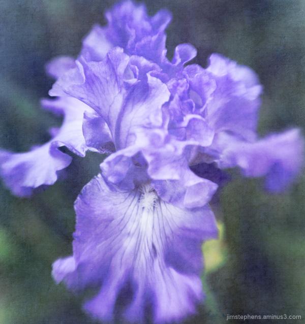 Iris900