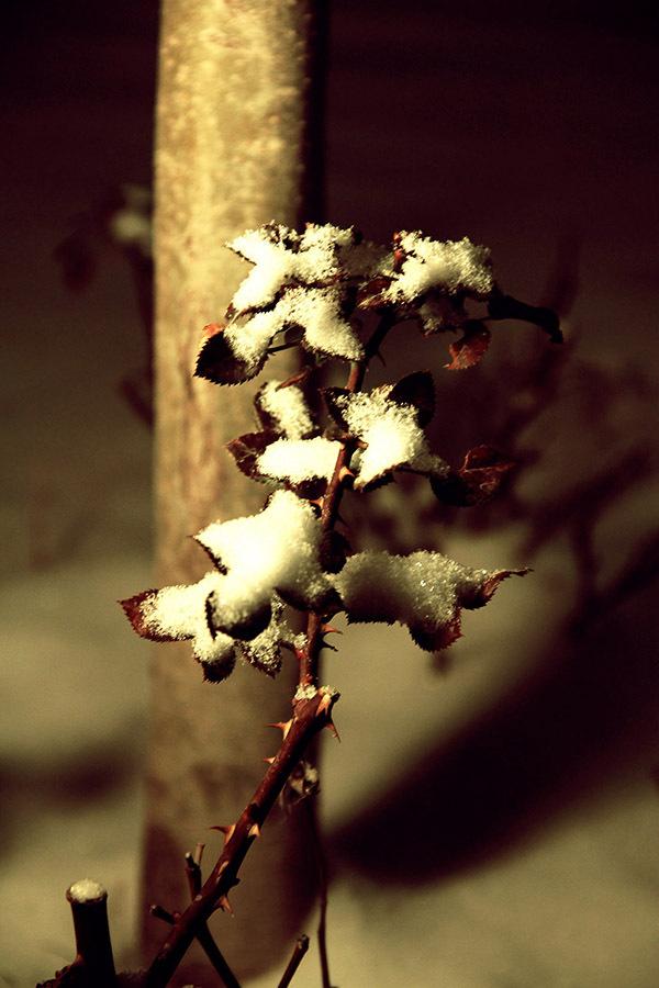 Winter Is Purple / V