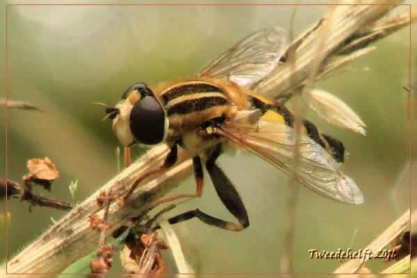 insect bij toeval gefotografeerd