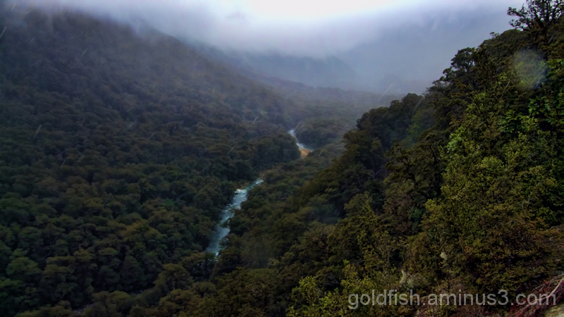 Road To Milford 10/14 - Hollyford Valley