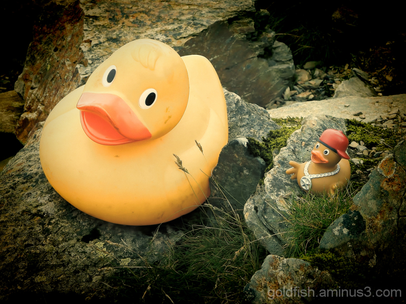 Two Ducks On Snowdon