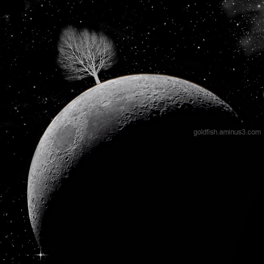 The Lunar Tree