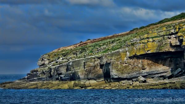 Ynys Seiriol / Puffin Island - 2/5
