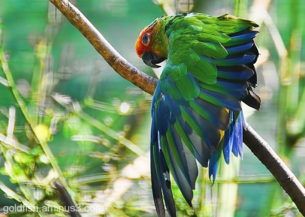 ? Parrot 2/2