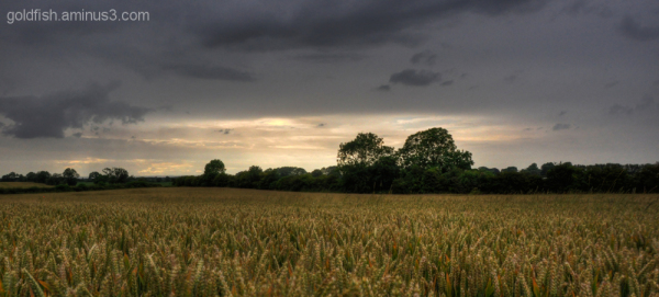 Wheat Field & Summer Sky