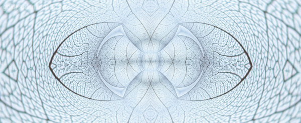 Cellular Contortions