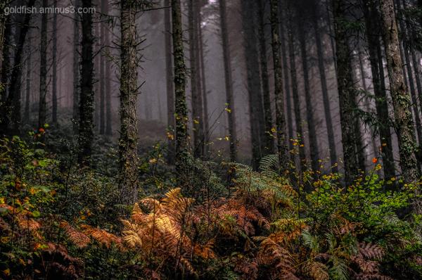 Autumn Colour 5/9
