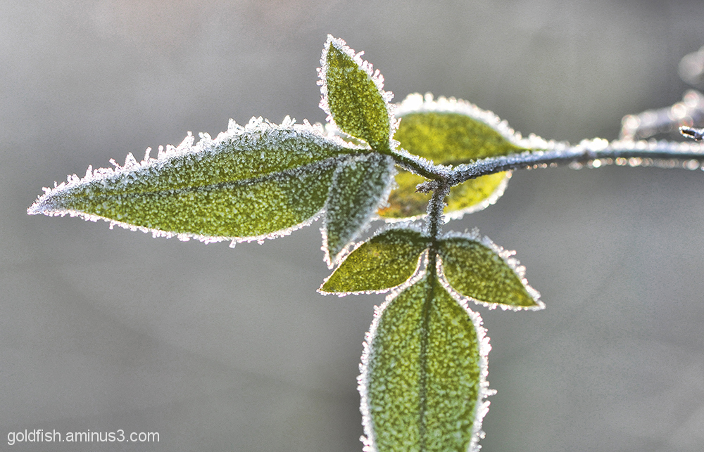 Jack Frost 3/7