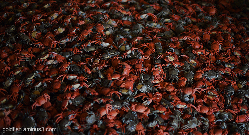 Ai Weiwei - He Xie