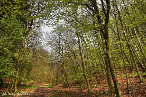 Queen Wood - Christmas Common 1/3