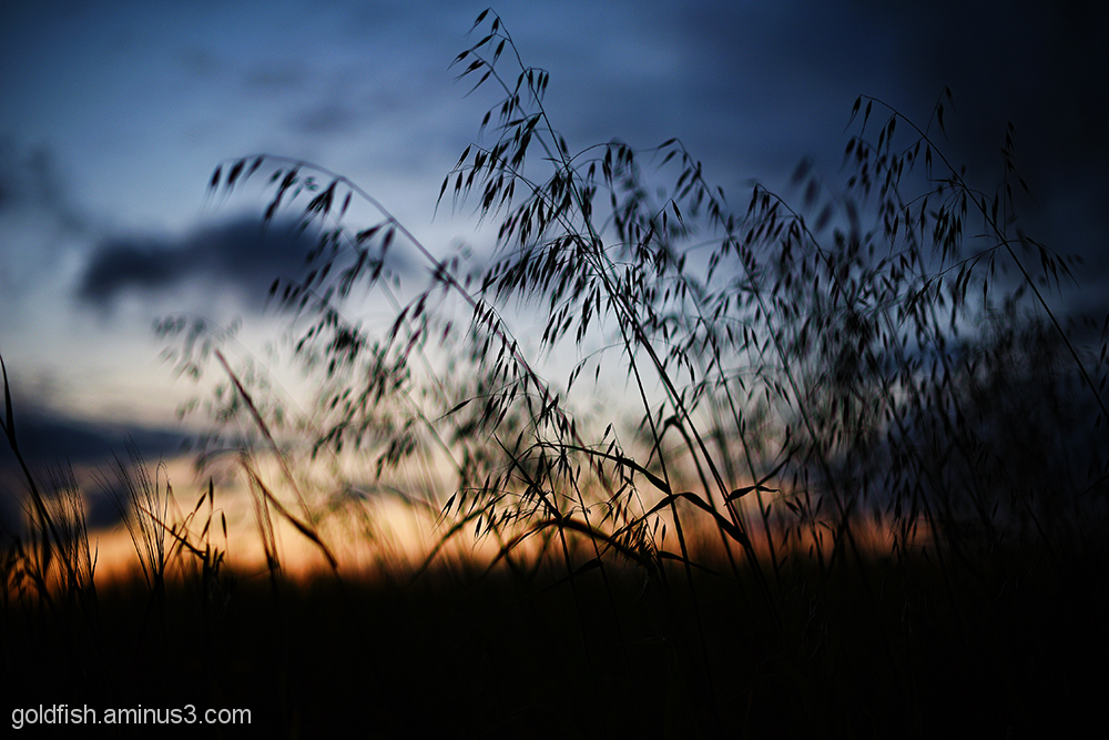 Grass Meadow Sunset