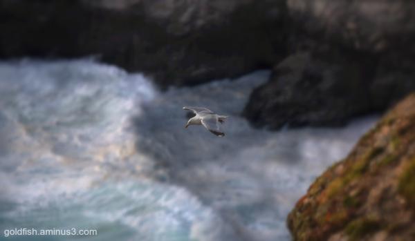 Bedruthan Flight