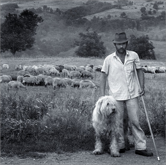Muntean Shepherd and dog ciobănesc Mioritic