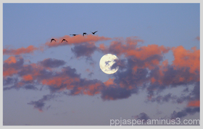 Geese and Early Morning Moon