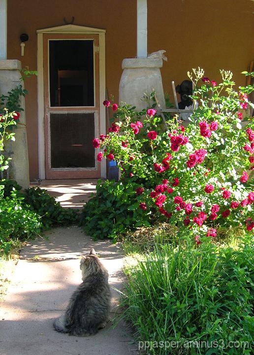 Kitty & Roses