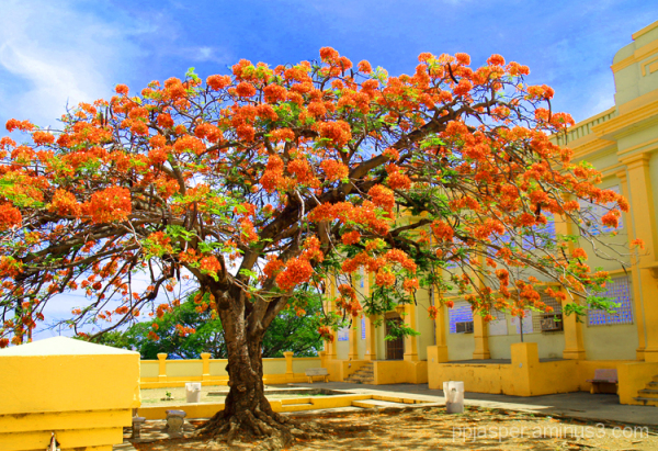 Flamboyan Tree & School - PR