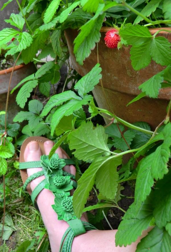Les Pieds de fraisiers