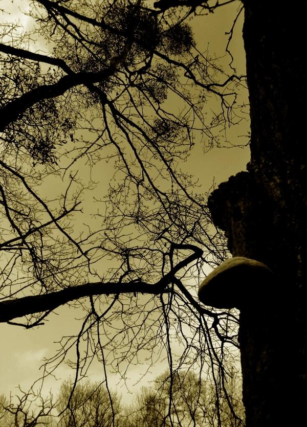 Les arbres marchent tête nue au soleil...