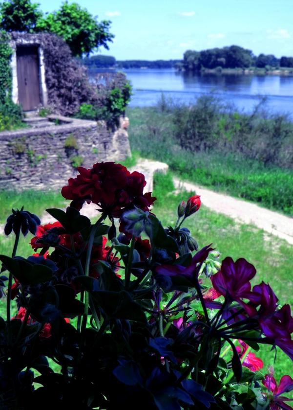 Un bouquet rose au banquet de la loire...