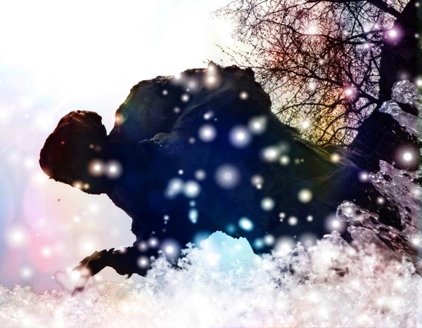 Les étoiles tombées du ciel cherchent à s'envoler