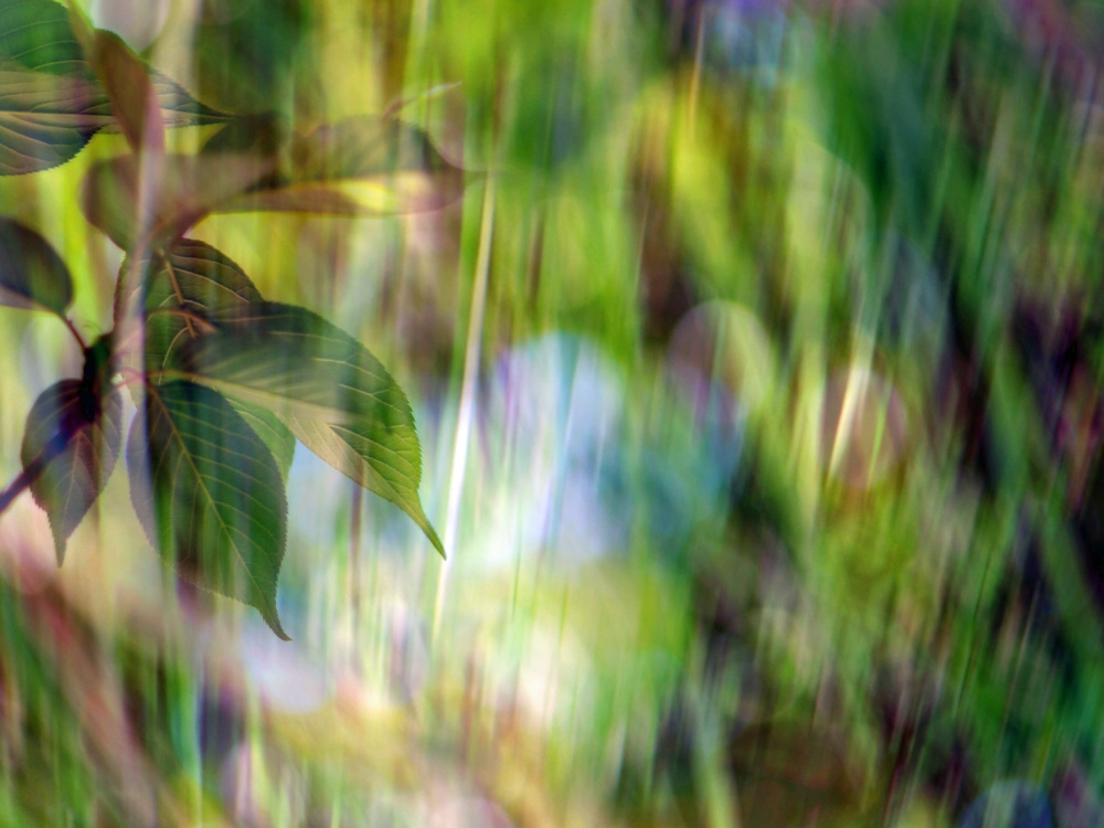 S'agitent des figures hallucinées aux feuilles...