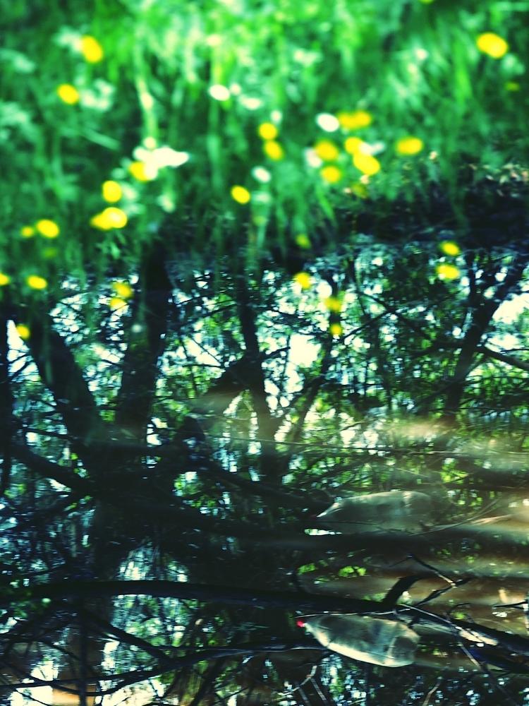 Aux boutons-d'or,il pleut à verse le lumineux lac