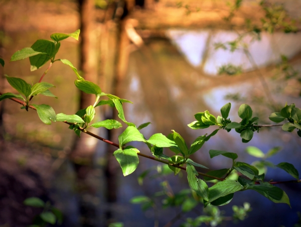 Branche de feuilles enrobée de lumière frémissante
