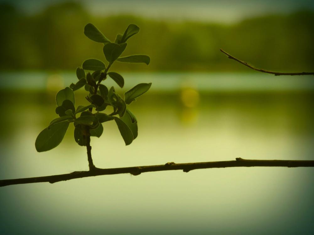Le vert du Lac reflète la couleur de la nature...