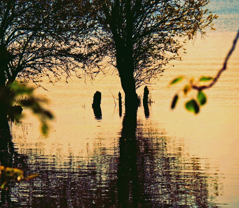 Le lac s'illumine sous l'éclat verdoyant...