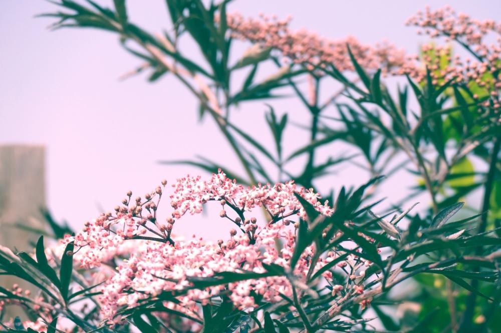 Encliner de la douceur à l'opale végétale du ciel