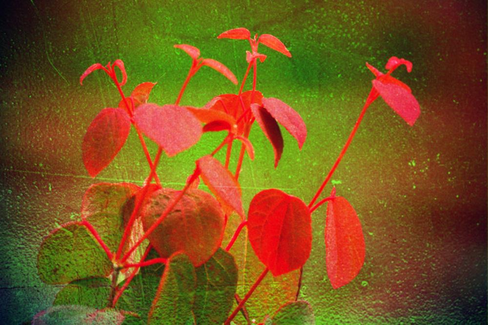 Le vitrail est plante de lumière percée de soleil