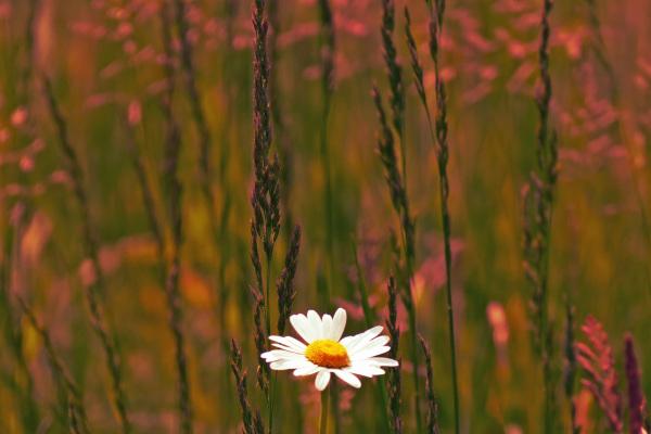Le doux crépuscule fleurit....