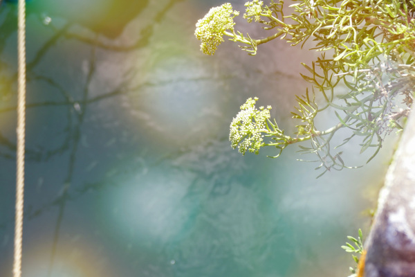 Le végétal s'accorde à la lumière de l'eau...