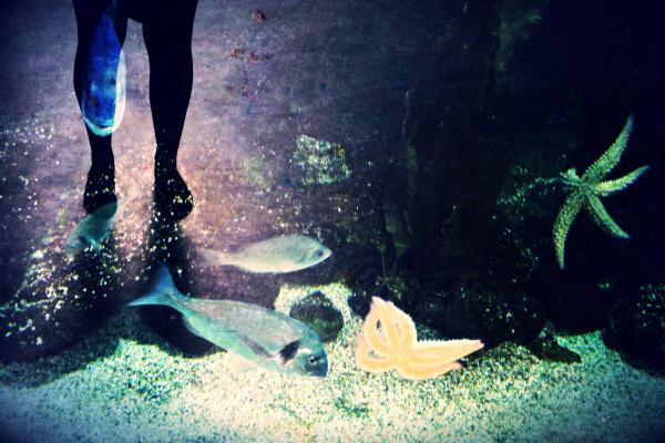 Répandre de la lumière au passage du poisson d'eau