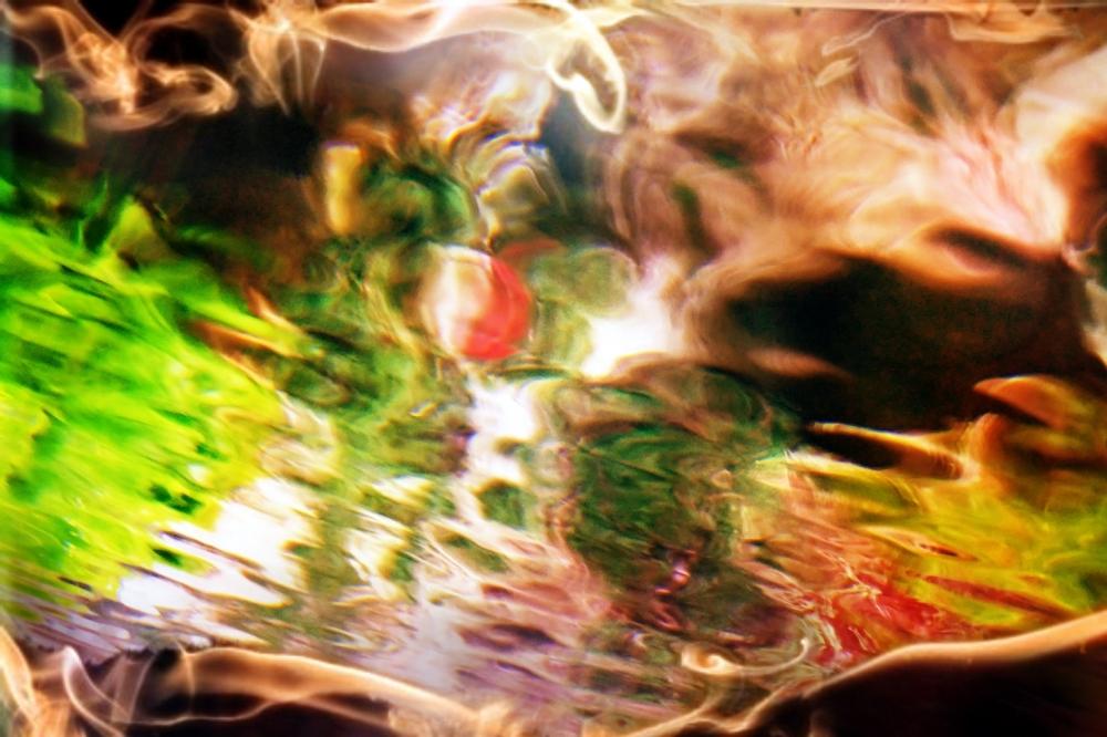 Les reflets aquatiques brûlent dans leurs couleurs