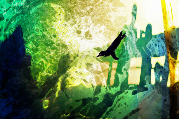 Fuir les ombres plongeantes...