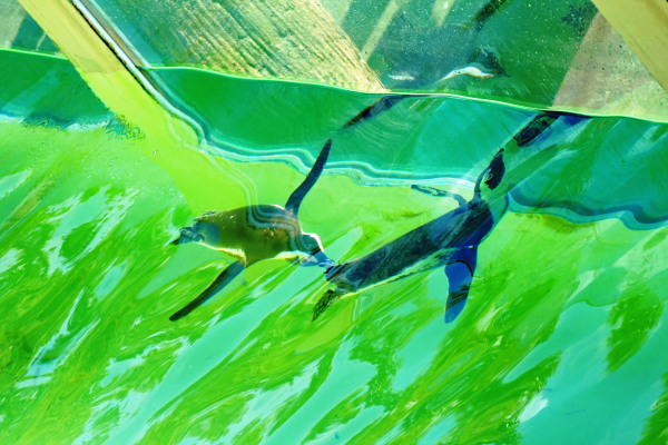 Plonger ligne à ligne au bassin vert son reflet...